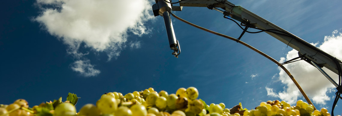 Comprar Vino Mosto de Chucena - Productores de vino mosto