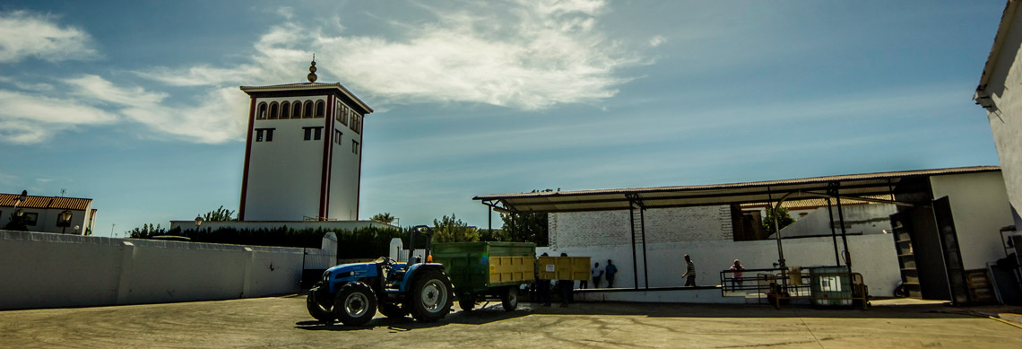 Comprar Vino Blanco de Chucena - Productores de vino blanco