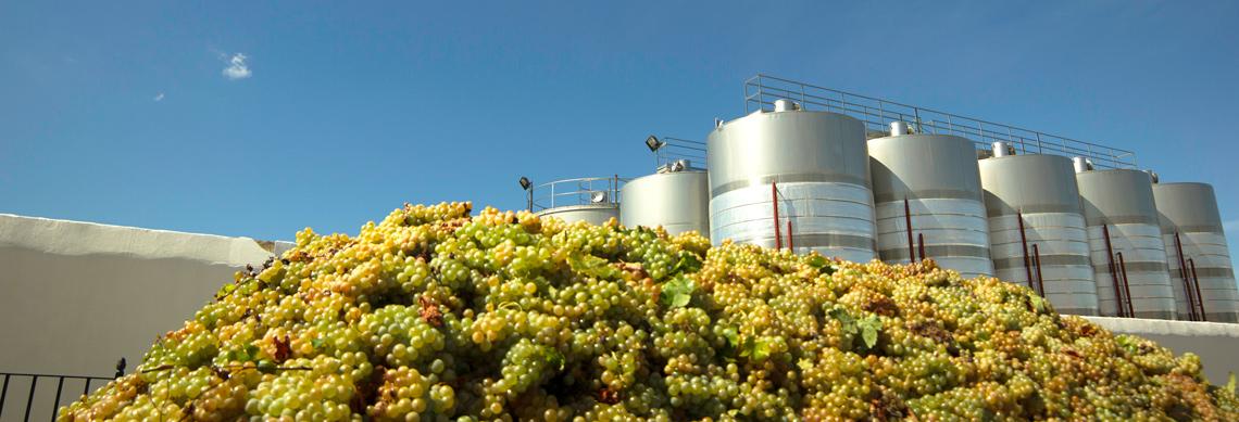 vinos de Chucena