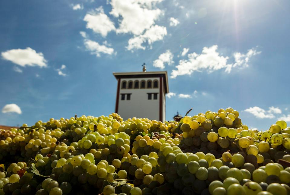 Comprar Vinos de Chucena – Vinos del Condado de Huelva